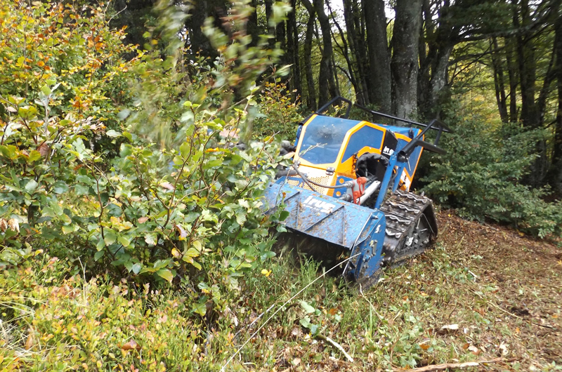 Débroussaillage en forêt